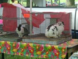more bunnies