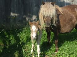 Candy and her foal