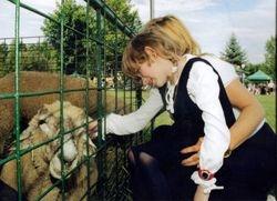 Clover  the sheep