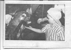 Boy meets Pygmy goat