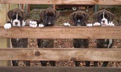 Spencer pups