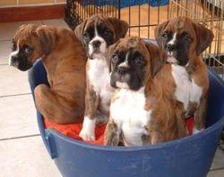 Chip x Aqua pups