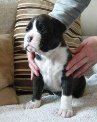 Boy 1 at 3 1/2 weeks