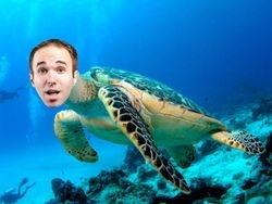 Turtle Taylor