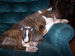 Snuggling in Brindi's Chair