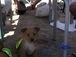 Oliver enjoying the sunshine