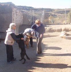 Dogs enjoying a play