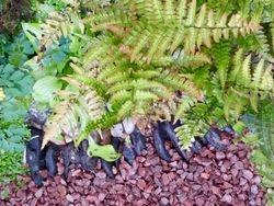 Ferns & gravel