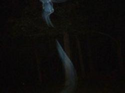 Mist raising to the trees