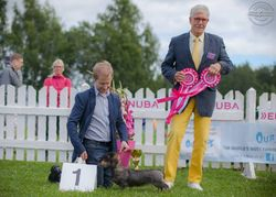 """BEST IN SHOW JUNIOR and BEST IN GROUP Tiny Trotter's Heart Of Minuet """"Myy"""""""