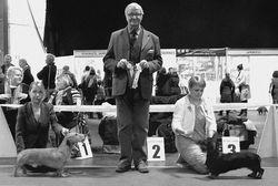 RIGA WINNER 2015 judge Andrzrej Mania (PL) BOB Tiny Trotter's Don Juan