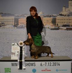 Helsinki Winner 2014 C.I.B. C.I.E. Tiny Trotter's Excalibur