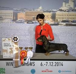 WINNER 2014 HeJW-10 HeW-10 JW-10 FI CH EE CH Tiny Trotter's Joburg