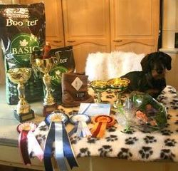 BEST IN SHOW 2 Tiny Trotter's Beretta