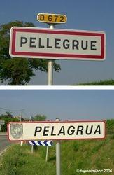 Pelagrua
