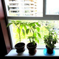 Small Space Greenery