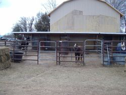 Stalls on east side of barn