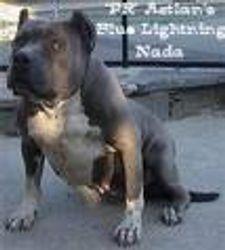 PR AZTLAN'S BLUE LIGHTING NADA