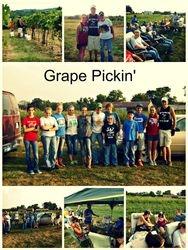 Grape Pickin'