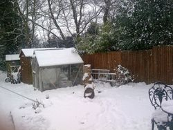 My garden covered in snow.