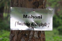 Penamaan Pohon di Kampus Unpatti Ambon