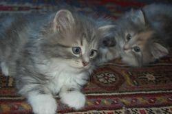 Anastasia og Angelina, 7 uker