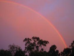 Pink Rainbow #1