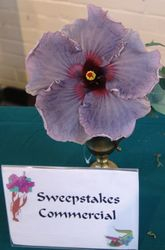 COMMERCIAL SWEEPSTAKES - BLUE JEAN BABY - Dupont Nursery, Plaquemine, LA.