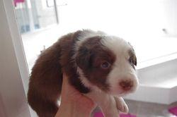 Charli's Puppies