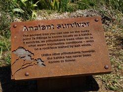 Ancient survivor