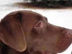 Koko February 2006