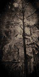 Tree by Gail Schiffman (AC)