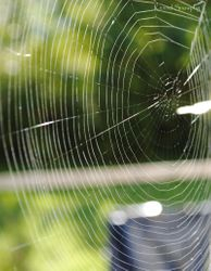 A perfect spidernet