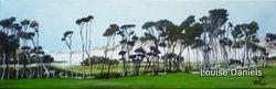 Stanley Tea Trees