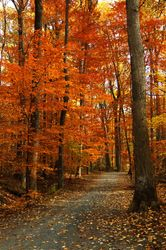 Wheaton Regional Park 1