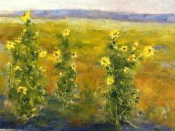 Sunflowers on I-70 2013