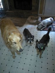 chillie, lucy,raylin & layla