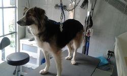 Hond uit Roemenie