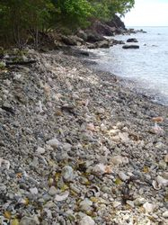 The shell beach in Carriacou