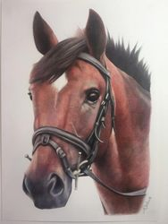 Commision in Coloured Pencil