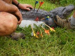 a shot croc