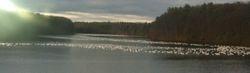 Snow geese 10miles away.