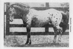 Mansfields Comanche