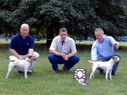 NWTF Open Show 2006 Best Jack Russell (right) & Reserve (left)