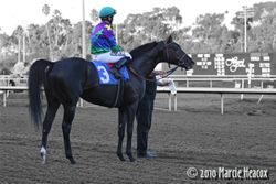 Unusual Suspect after the Hollywood Turf Cup