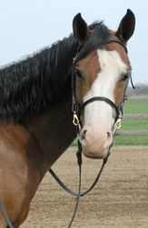 Quigs Positive Payoff, aka Reba is a 2004  APHA mare