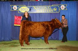 LEA Halcyon, Reserve Champion Junior Yearling Heifer