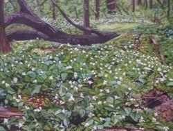 Wild Trillium at Sandridge NC