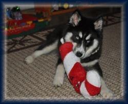 Jetta's first Christmas