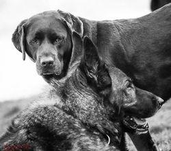 Benson,Floyd